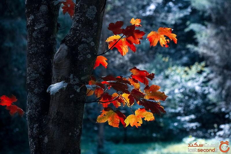 عکس پاییزی