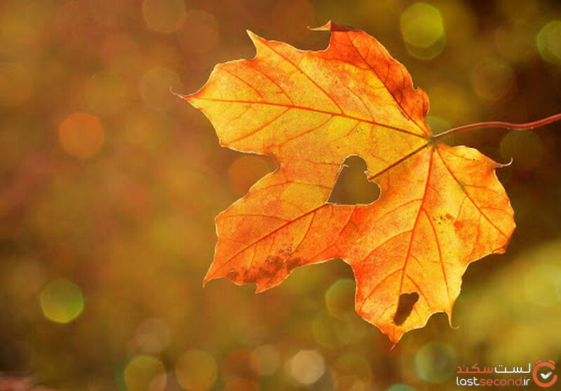 دانلود عکس پاییز
