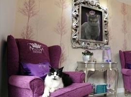نخستین هتل 5 ستاره دنیا برای گربه ها +تصاویر