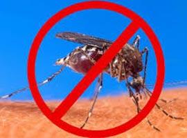 چگونه در طبیعت  از نیش  پشه در امان بمانیم؟