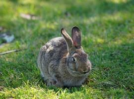 حصار ضد خرگوش در استرالیا!