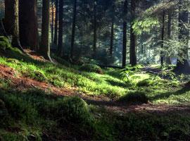 زیباترین جنگل های جهان + تصاویر