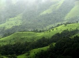 زیباترین جنگل های ابر دنیا + تصاویر