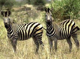 دیدار با سلاطین ،سفرنامه پارک حیات وحش کروگر در آفریقای جنوبی