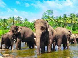 راهنمای سفر به کندی(سریلانکا) و جاذبه های بسیارش