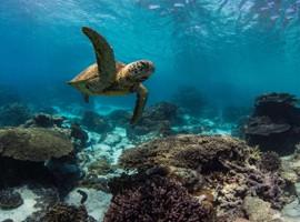 چگونه می توان از صخره های مرجانی محفاظت نمود؟
