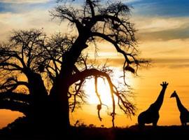 سفرنامه آفریقای جنوبی - قسمت اول