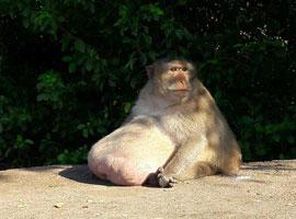 بلایی که گردشگران بر سر یک میمون آوردند  + تصاویر