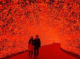 نمایش جذاب و دیدنی نورها در ژاپن