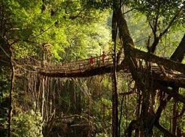 پلی عجیب از ریشه درختان زنده در هندوستان + تصاویر